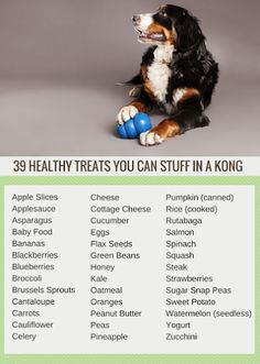39 Healthy Snacks to Stuff in a Kong