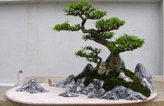 Hon non bo - Hòn Non Bộ (Hahn Nahn Bo ) is the Vietnamese art of making miniature landscapes, imitating the scenery of the islands, mountains and surrounding environment as found in nature. It is a particular local development of the Chinese art of penjing, as was bonsai in Japan.