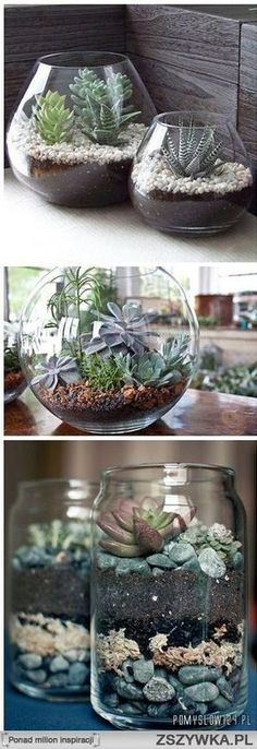 I love the vases/bowls they're in!: