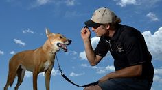 """James Bornstein with his pet Dingo named """"Kimba"""" during her daily walk on a beach on the outskirts of Sydney"""