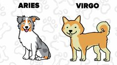 Watch: What Kind Of Dog Is Perfect For You According To Your Zodiac Sign?