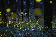 photo of fireflies using a long exposure