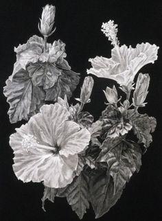 Hibiscus Silverpoint & Gouache