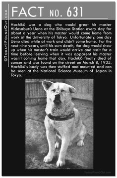 Saw the movie loosely based on the story of Hachiko. Made me cry True Facts, Weird Facts, Random Facts, Hachi A Dogs Tale, A Dog's Tale, Akita Dog, Dog Stories, Faith In Humanity Restored, Shiba Inu