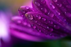 love dew drops!