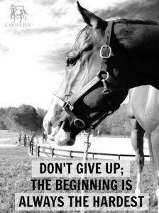 Horse Was My First Word - Horse, Pony, Info, Equine, Equestrian - Inspirational Horse Quotes - Equine Quotes, Equestrian Quotes, Equestrian Problems, Horse Love, Horse Girl, Barrel Racing Quotes, Inspirational Horse Quotes, Horse Riding Quotes, Horse Riding Tips