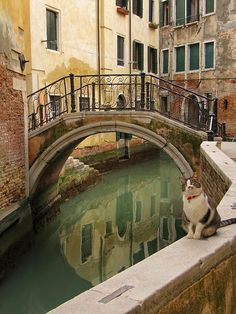 Venice... City of cats... See the entire photo series at http://www.traveling-cats.com/2014/04/cats-from-venice-italy.html #cats #Italy #Venice