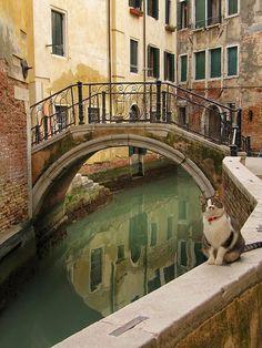 Venice... City of cats... Veneto