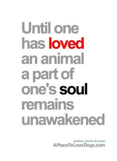 Until one has loved an animal, a part of one's soul remains unawakened • from  APlaceToLoveDogs.com • dog dogs puppy puppies cute doggy doggies adorable funny fun silly quotes