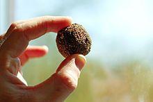 Seed ball - Organic Compost, Organic Gardening, Gardening Tips, Urban Gardening, Fukuoka, Permaculture, Acerola, Seed Bombs, Three Sisters