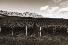 Chardonnay and Carmenere for days #tfgleica no.12 Black Sage Road Icon