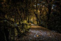 https://flic.kr/p/DGZy69 | Sanctuary Garden Path | Caminho na floresta do Parque de Bom Jesus em Braga, Portugal. Este parque natural belíssimo se encontra numa colina atrás Santuário do Bom Jesus do Monte