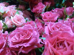 En Blomma För Alla www.varldensblommor.se