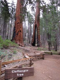 6f6c61967c7 Giant Sequoias at Mariposa Grove in Yosemite National Park