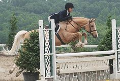 7 Tips to Prepare For Your Next Horse Show