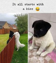 Animals on - Cat videos, Dog pics and other cute animals Funny Animal Jokes, Funny Dog Memes, Really Funny Memes, Funny Animal Videos, Cute Funny Animals, Funny Cute, Funny Dogs, Pet Videos, Hilarious