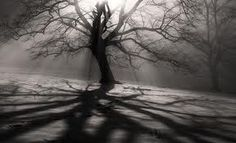 Reminds me of Sleepy Hallow' tree of death