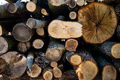 """Welche Holzart ist die Beste? Die verschiedenen Holzarten haben ihre Vor- und Nachteile. Die erste Frage ist: """"Habe ich einen Kachelofen, Kamin oder einen Zentralheizungskessel und was ich meine Hauptwärmequelle?"""" Firewood, Texture, Crafts, Kettle, Types Of Wood, Random Stuff, Surface Finish, Woodburning, Manualidades"""