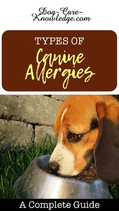 Canine allergies cause many skin problems in dogs. You can't always avoid the cause but you can manage and control the symptoms at home.