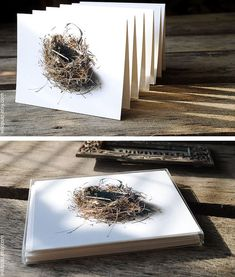 SALE  Your Choice of 6 Bird's Nest Inspired Cards  by wildpulp