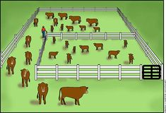 Http://YouTu.be/P4FUE-OrXRw Sorting cows/calves