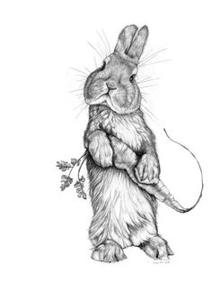 """Easter """"Rabbit"""" sketch by Tifani Carter, about Behance Wood is a lawful . Bunny Sketches, Art Drawings Sketches Simple, Animal Sketches, Pencil Art Drawings, Animal Drawings, Cute Drawings, Art And Illustration, Illustrations, Rabbit Drawing"""