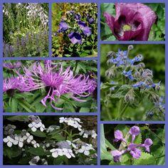 Border aanleggen met blauwe bloemen - border aanleggen op kleur met vaste planten en sierheesters
