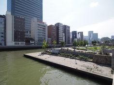 中之島バラ園 : 大阪市, 大阪府