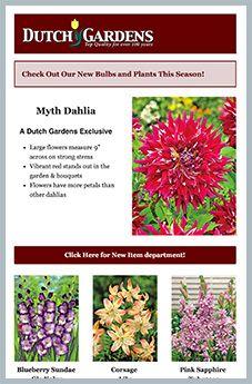 Perennials Products - Dutch Gardens USA, Inc. Colorful Shrubs, Tropical Plants, Fall Plants, Garden Plants, Flowering Plants, Planting Seeds, Planting Flowers, Easy To Grow Bulbs, Garden Nursery