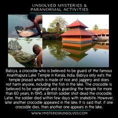 Babya, the mysterious crocodile, in India. - Babya, the mysterious crocodile, in India. True Interesting Facts, Some Amazing Facts, Interesting Facts About World, Intresting Facts, Unbelievable Facts, Wierd Facts, Wow Facts, Wtf Fun Facts, Mysteries Of The World