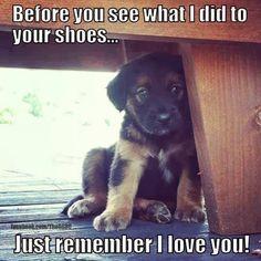 #puppy #cute #adorable