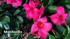 Make Stunning Mason Jar Solar Lights - Coffee Grounds Garden, Pachira Aquatica, Rope Lighting, Knockout Roses, Chlorophytum, Powdery Mildew, Borscht, Inside Plants, Tree Stumps