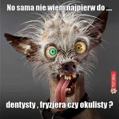 Hilarious, Funny & Sexy has members. Welkom by Afrikaner humor en witt, hilarious and funny pics (ADULTS Lees asseblief die reels van. Animal Pictures, Funny Pictures, Funny Pics, Crazy Pictures, Funny Stuff, Funny Videos, Funny Shit, Ugly Animals, Adorable Animals