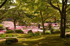 Matsue Shimane Izumo daikonshima jardin japonais yuushien yushien yûshien pivoine