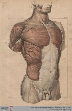 Body Anatomy, Anatomy Study, Model Sketch, Human Body Systems, Anatomy For Artists, Jean Baptiste, Figure Drawing, Art Studios, Paris