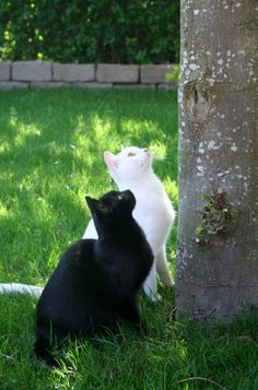 "** BLACK CAT: "" Wut nowz? Wut we supposed to do with allz deez feelin's we haz to catch de squirrel?"""