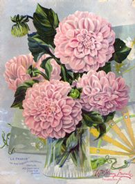 Dahlia Bouquet Artwork  How to condition dahlia's and other bulbs