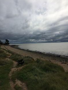 Dog walk along warsash beach