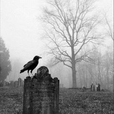 """""""....For the rare and radiant maiden whom the angels named Lenore - Nameless here for evermore..."""" -Edgar A. Poe"""