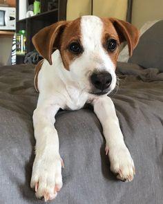 Trompie Fan, Dogs, Animals, Instagram, Animales, Animaux, Pet Dogs, Doggies, Fans