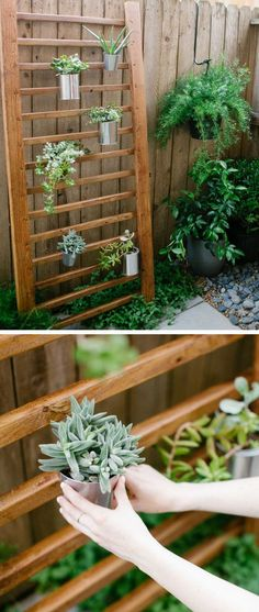 Outdoor Succulent Wall Accent | Click Pic for 20 DIY Garden Ideas on a Budget | DIY Backyard Ideas on a Budget for Kids