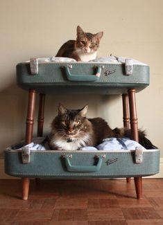 Heb jij katten of ken jij mensen met katten dan weet je dat katten graag ergens in klimmen. Om je bank of bed te besparen is het handig om zelf een klimtoestel te kopen maar je kan hem natuurlijk ook zelf maken. Heb je wat inspiratie nodig? Geen p...