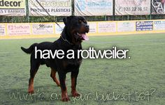 Have a Rottweiler. DONE. RIP sweet puppy.