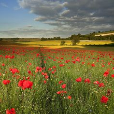 """Belgian countryside """"In Flanders Fields"""". My Grand Uncle Peter McDonald died out there somewhere. Nature repairs the scars of war so well, but my great grandmother never recovered. Beautiful World, Beautiful Places, Landscape Photography, Nature Photography, Night Photography, Flanders Field, Remembrance Day, Red Poppies, Amazing Nature"""