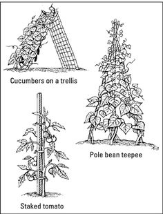 Garden Stakes, Trellises, and Cages for Your Edible Garden