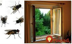 Rada sa podelím o perfektnú vec proti muchám a osám, teraz na začiatku leta to určite využijete. Ja to praktizujem každý rok a to nemám ani sieťku na oknách. Muchy aj osy sa vám budú vyhýbať.