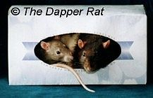 "This aussi blog has loads of cute & inexpensive ideasto entertain your pet rats (and if anyone says ""ewwww"", you're an asshole. They are amazing pets.)"