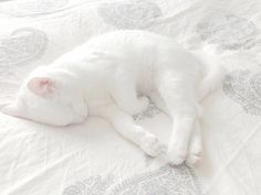 #white #cute #kitten