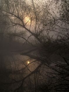 reflected trees silhouetted against full moon in winter via ^^ Bark at the Moon
