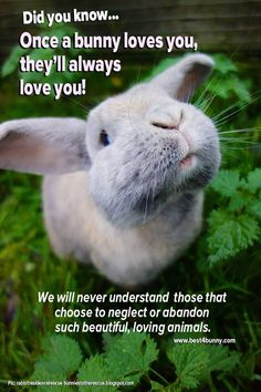 Once a bunny loves you, they will always love you! www.best4bunny.com